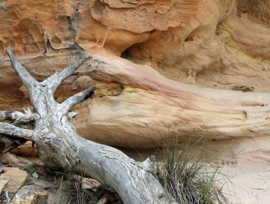 Hidden Wonders - Pilliga Nature Reserve