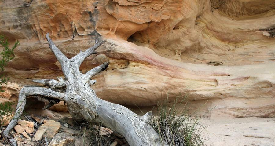 Yaminba Sandstone Caves - PilligaNR091114 (46)
