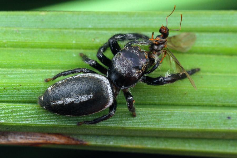 poss new genus - MnRng271015 (4)